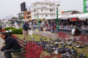 Alimentando os pombos na Fronteira da Paz